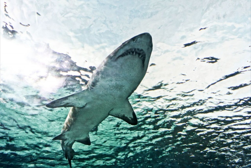 June - July - August  More recorded shark attacks along East Coast than ever
