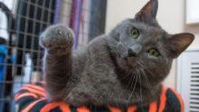 Circle Of Life Cat Santuary