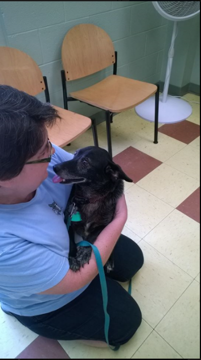 Horry County Shelter