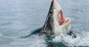 Myrtle Beach Shark Attack